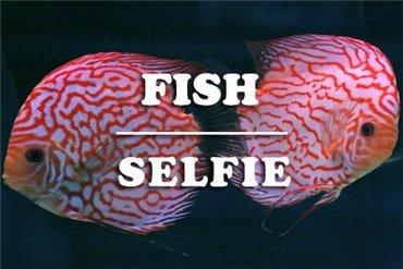 Fische (WYSIWYG)